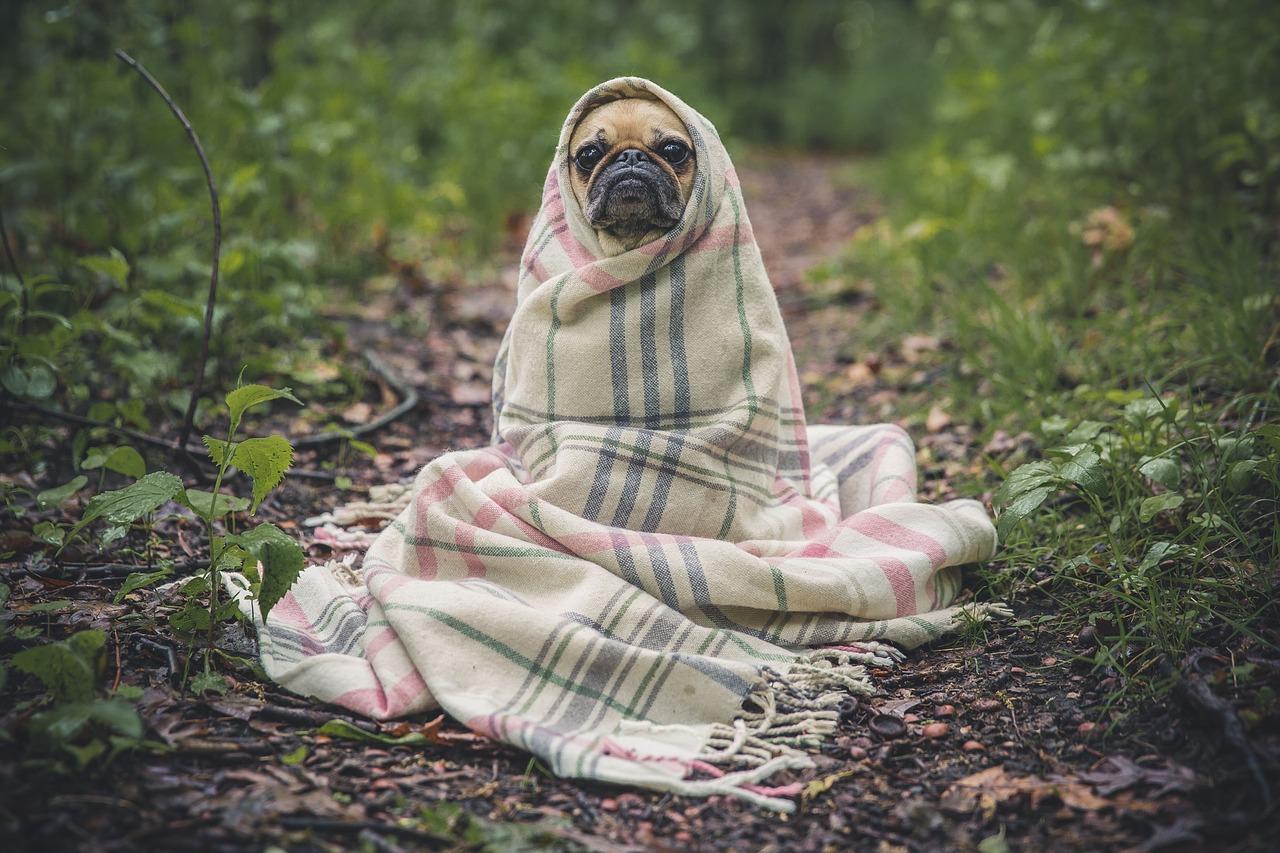 Hund warm halten