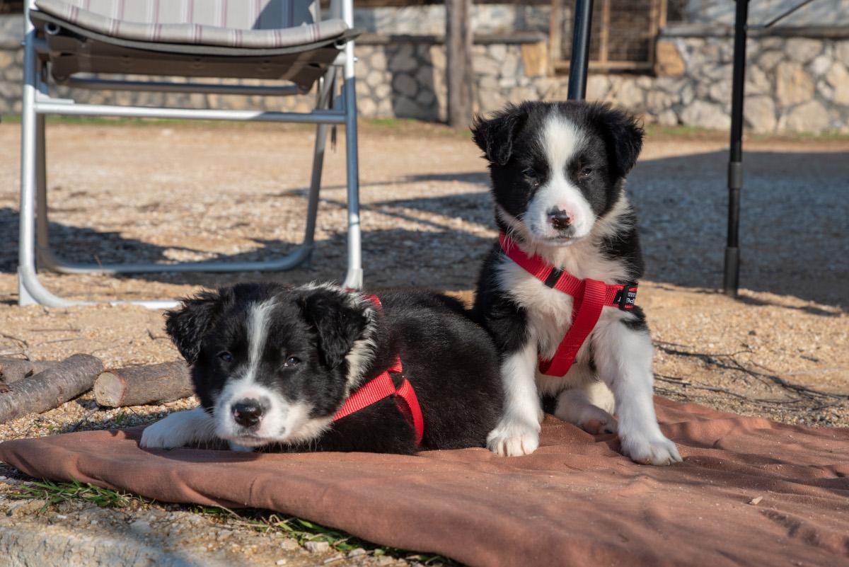 Mit zwei Hundewelpen auf Weltreise