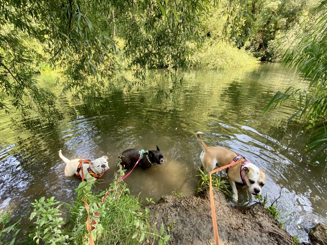 Nene Park mit Hunden